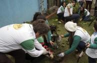 Jornada de Arborizacion en Chile