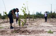 conservación de especies vegetales